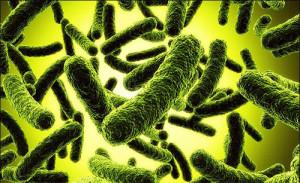 дисбактериоз-кишечника
